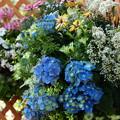 みしま花のまちフェア