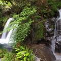 Photos: 初景滝の傍にも