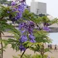 サンビーチに咲く