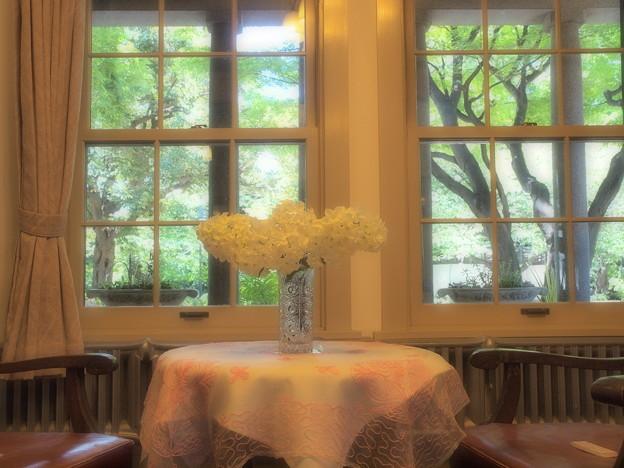 窓の外の緑葉