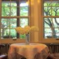 Photos: 窓の外の緑葉