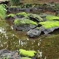 亀さん溶岩石