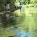 Photos: 過ぎ行く夏の水辺を歩む