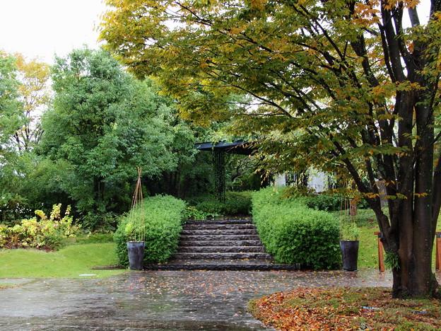 秋雨に濡れたクレマチスガーデン