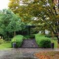 Photos: 秋雨に濡れたクレマチスガーデン