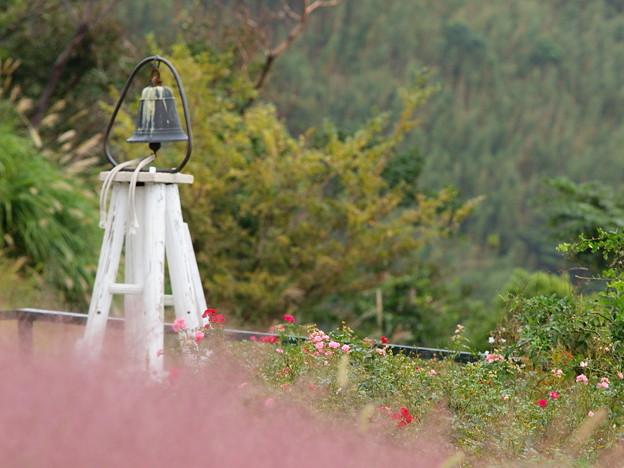 秋バラ咲く鐘の有る情景