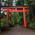 Photos: 箱根神社の入り口は…