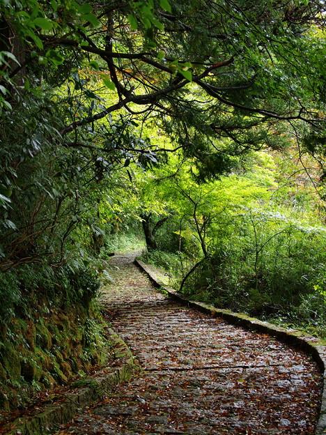 芦ノ湖湖畔の遊歩道は…