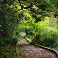 Photos: 芦ノ湖湖畔の遊歩道は…