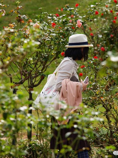 Photos: 秋薔薇を愛でるひと