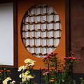 菊花に飾られた仁和寺