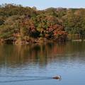 Photos: 水辺の秋