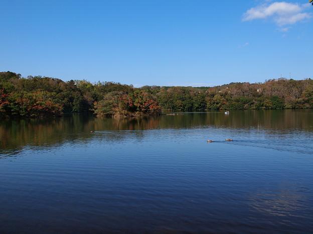 秋の青空と湖畔と