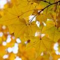 Photos: 秋色に染まる
