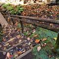 Photos: 落ち葉、踏みしめて