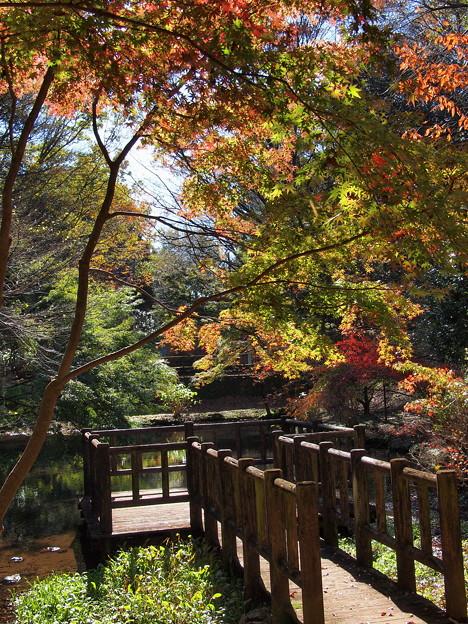 Photos: 秋色キラキラ☆