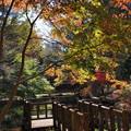 秋色キラキラ☆