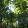 Photos: 晩秋の竹林の小径