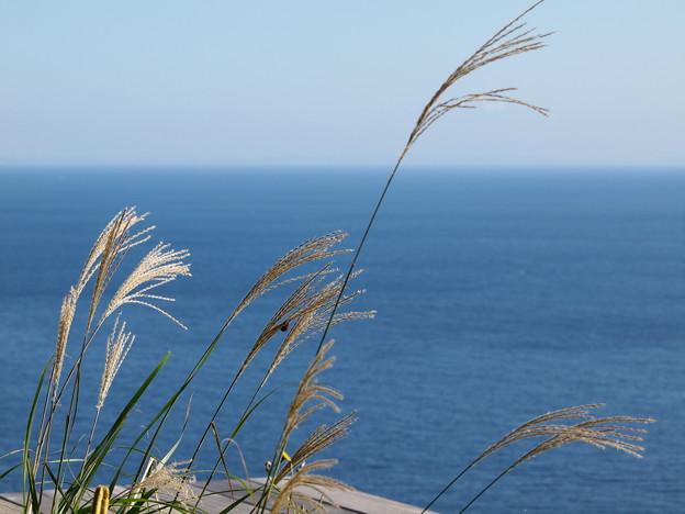 Photos: 海を見たかい