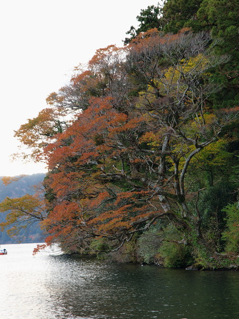 湖畔の秋色