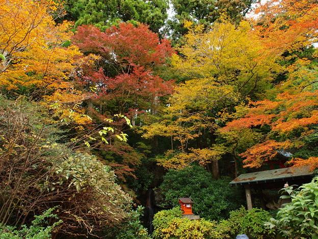 境内は秋色