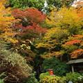 Photos: 境内は秋色