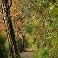 Photos: 秋の散歩道