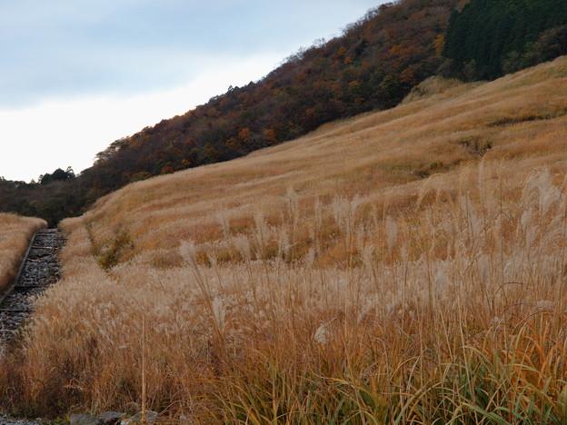 仙石原は秋の色