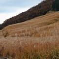 Photos: 仙石原は秋の色