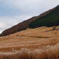 Photos: 仙石原の芒、今年も見頃♪