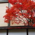 Photos: 晩秋の秋色