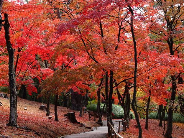 伊豆の地も秋色に包まれて