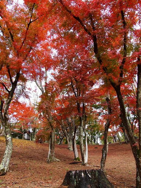 秋色に包まれし