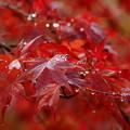 秋色キラリ☆