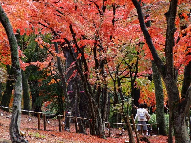 秋色の中のふたり