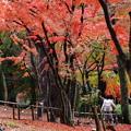 Photos: 秋色の中のふたり