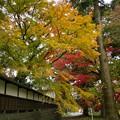 Photos: 山寺も秋色に覆われし