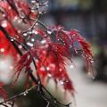 Photos: 秋色に纏わる☆