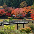Photos: 秋色に覆われた太鼓橋