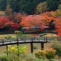 秋色に覆われた太鼓橋
