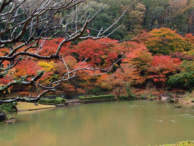 秋色に囲まれし池の畔