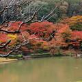 Photos: 秋色に囲まれし池の畔