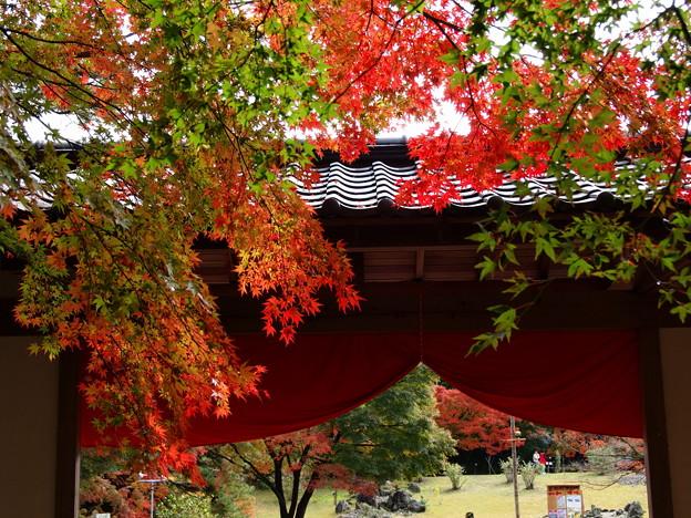 秋色垂れる門構え~LEICAが見た情景