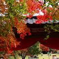 Photos: 秋色垂れる門構え~LEICAが見た情景