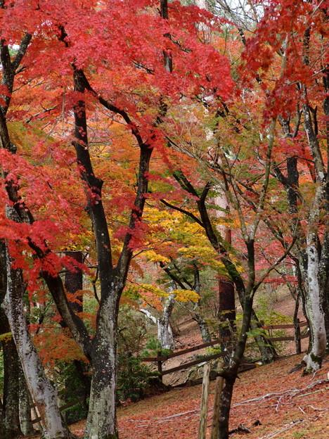 秋色した木立