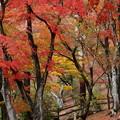 Photos: 秋色した木立