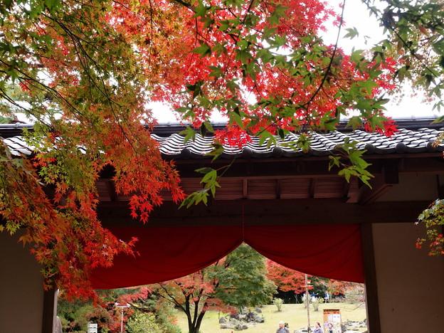 秋色垂れる門構え~ZUIKOが見た情景