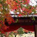 Photos: 秋色垂れる門構え~ZUIKOが見た情景