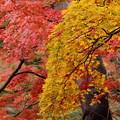 垂れる秋色2色