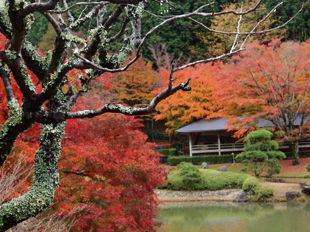 秋色を見守る古き樹木